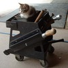 http://diario.liquidoxide.com/archives/images/2927/toolbox_kitteh-thumb.jpg