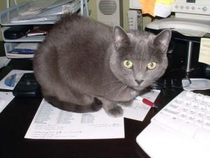Conseguem ler a lista dos arquivos que tenho que alterar? Eu também não, com a gata sentada em cima...