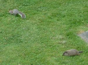 Do tamanho... de um esquilo!