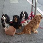 Cachorros pedindo esmola na rua... ninguém deu dinheiro, mas alguém encheu a caixa deles com água. Que vergonha.